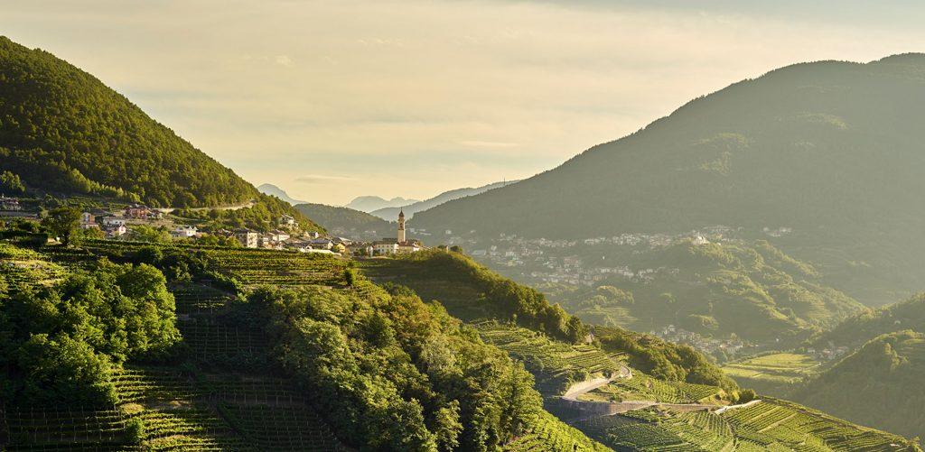 Wijngaarden in de Cembra-Vallei | Bollicine