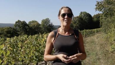 De bijzondere wijngaarden van Bertrand Machard de Gramont.